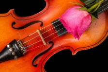 Violin and red rose on black background.